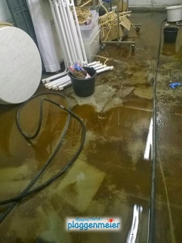 Wer den Schaden hat, braucht für den Spott nicht zu sorgen. Wir waren fast fertig mit Renovierung und Sanierung, da kam der Wasserschaden.