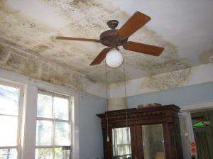 Darstellung von Schimmelbildung im Wohnraum - gefunden auf Wikipedia